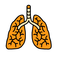 Illustration Lungs